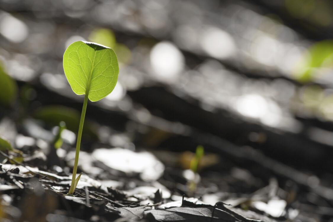 Baggrundsbillede med voksende plantefrø
