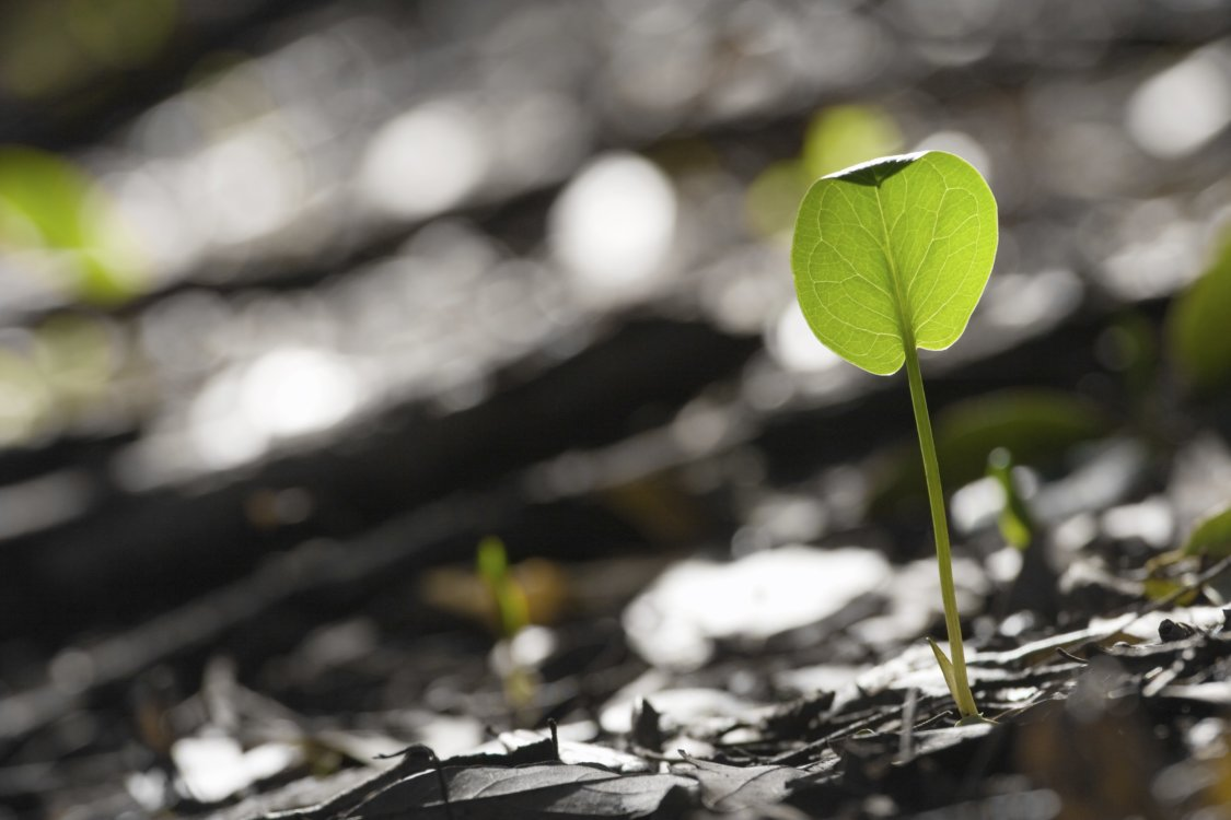 Baggrundsbillede af voksende plante